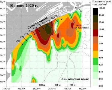 Распределение тихоокеанских лососей (тыс. экз./км2) на акватории Камчатского залива по данным гидроакустической съемки 10 июня 2020 г.