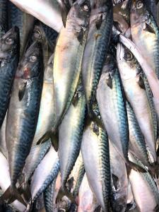 Ученые займутся вопросами лососеводства на Южных Курилах