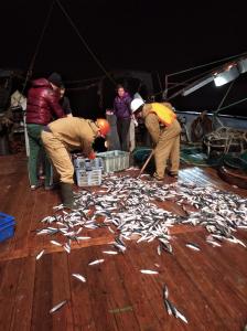 Ученые ВНИРО сообщили о результатах исследований в тихоокеанских водах Курильских островов