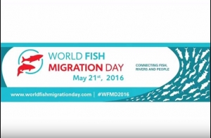 VIDEO: World Fish Migration Day in Moscow. VNIRO & Moskvarium